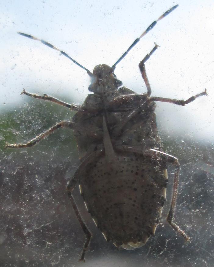 Insektenbesuch am Fenster