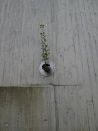 Natur am Bau