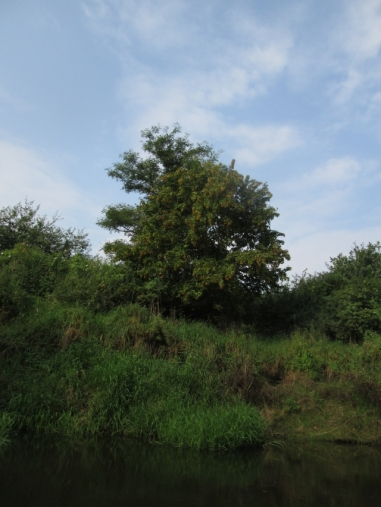 Frühherbstlicher Baum