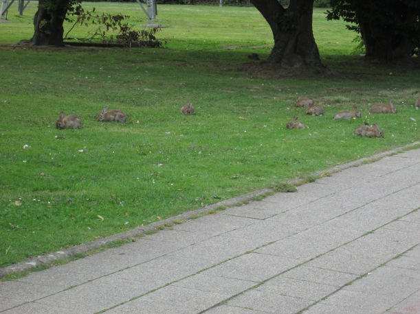 Kaninchen wo man hinschaut