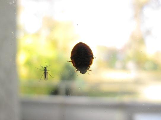 Begegnung auf der Fensterscheibe