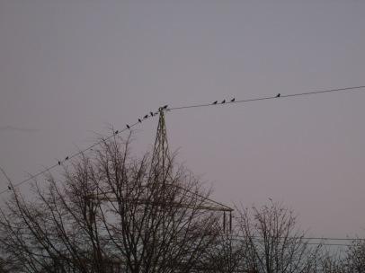 ... auf der 110 kV - Leitung