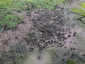 Wildkaninchenköttel