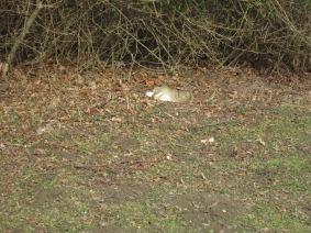 Kaninchen Karola, das um keinen Preis sein sonniges Plätzchen aufgeben mochte ...