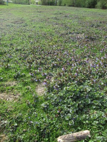 Blumenwiese - kein Klee