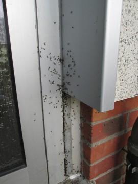 Ameisen-Invasoren