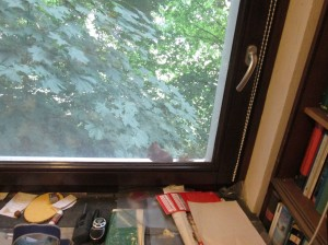 Junger Ahornbaum vor dem bürofenster