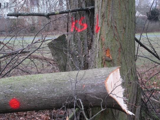 Hier bitte Baum ...
