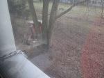 Bei der Arbeit - fotografiert durch Fliegengaze-Bürofenster