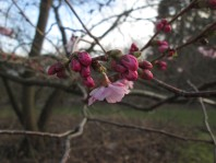 ... Baumblüte ...