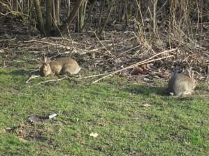 ... und Kaninchen, die sich's schmecken ließen.