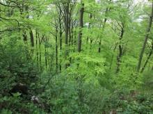 Zartes Waldgrün