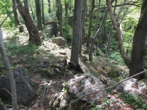 170513_010_Klippenwald_WIth