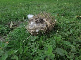 Nest (ganz anderer Fall), vermutlich aus dem Baum direkt daneben gefallen ...