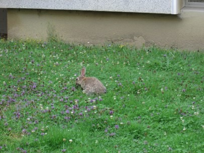 ... und zufriedenen Kaninchen. Jetzt haben wir gemähten Rasen 😢