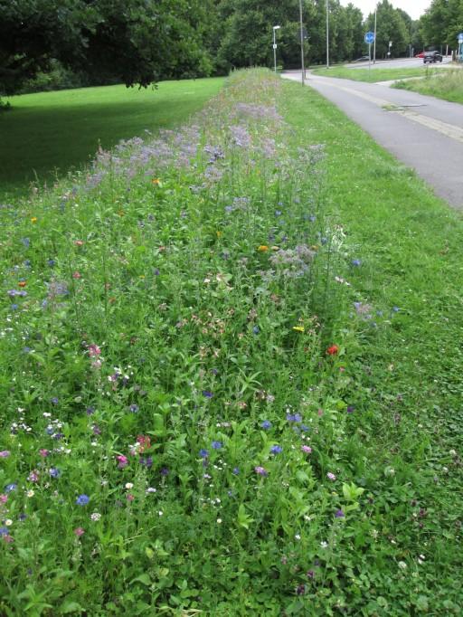 """So einen Blumenwiesenstreifen hätte ich auch gern bei uns in der Nähe im """"Hochspannungspark"""""""