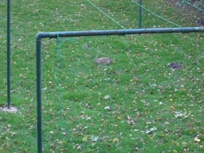 ... in der Weststadt am Hochspannungspark, wo sich Hase und Igel gute Nacht sagen