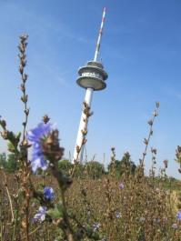 Fernsehturm im Blütenmeer
