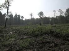Kein Wald mehr