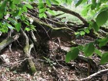 War mal Wald