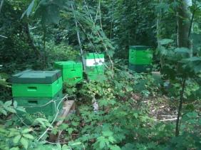 Bienenstöcke im Wald?!