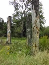 Schönes Totholz für allerlei Höhlenbewohner